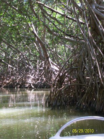 Celestún Mangroves